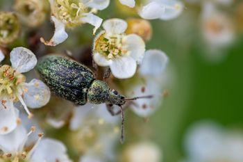Fleur et insecte.jpg